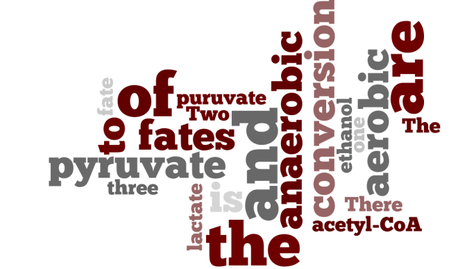 Fates of pyruvate wordle :D